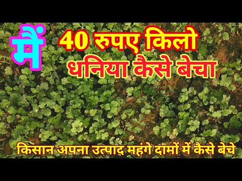 Xxx Mp4 How We Are Selling Coriander At 40 Rs Per Kg धनिया 3gp Sex