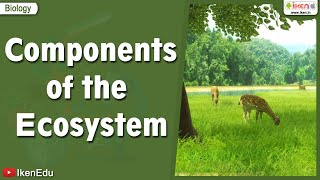 Components of the Ecosystem