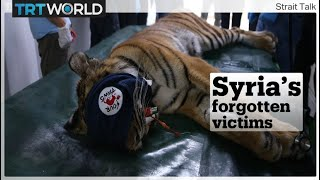 How these animals from Syria's Magic World Zoo were rescued from the war-ravaged Aleppo