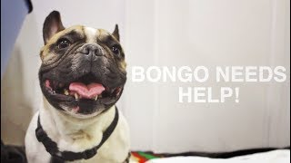 BONGO: ABANDONED BY HIS FAMILY AT SHELTER BECAUSE HE BECAME PARALYZED
