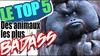 Le top 5 des animaux les plus badass (reupload)