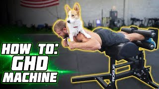 HOW TO get your POSTERIOR CHAIN JACKED!!! Using the Glute Ham Developer (GHD)