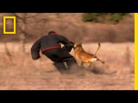 Dog Attack Styles