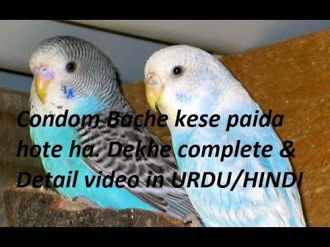 Xxx Mp4 Condom Bache Kese Paida Hote Hai Dekhe Complete Video In URDU HINDI 3gp Sex