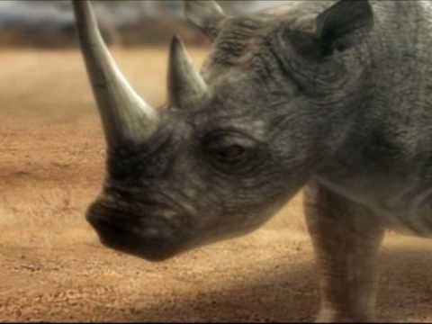 Duelo Animal Elefante versus rinoceronte