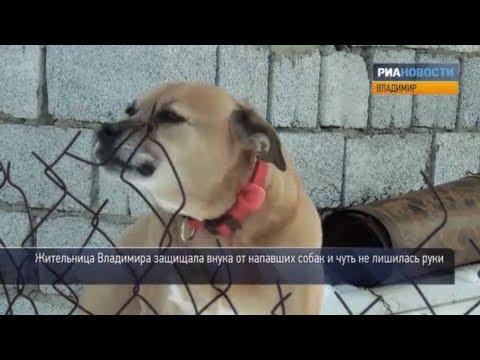 Что делать если собака прокусила ногу