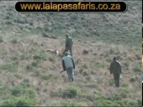 Hunting a Barbary (Aoudad) Sheep with Lalapa Safaris Eastern Cape South Africa.mpg