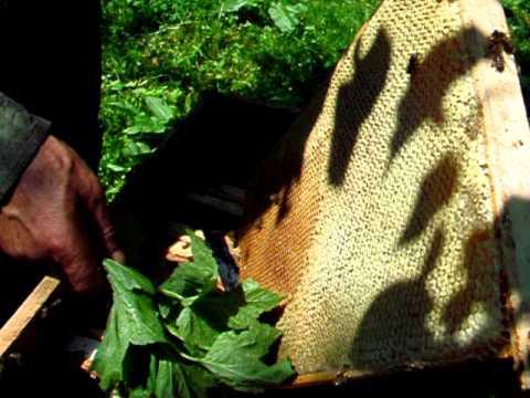 rekordzistki pszczoły miód wielokwiatowy 2011.Bienenzucht Nordpolen