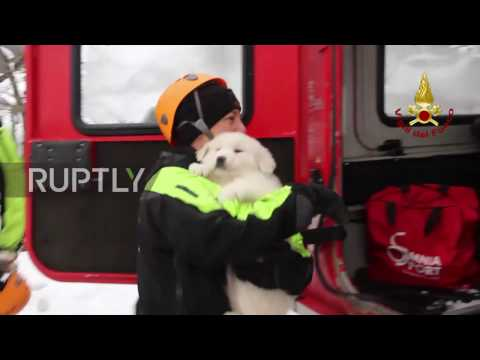 Italy: Three puppies rescued from rubble of avalanche-hit hotel