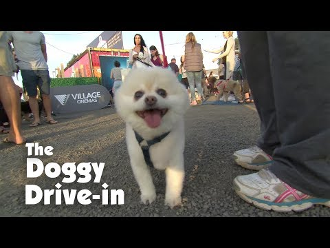 Bring Your Pups to The Doggy Drive-In!
