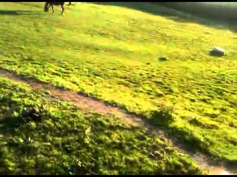 Xxx Mp4 Galloping On A Horse Saddle View 3GP 3gp Sex