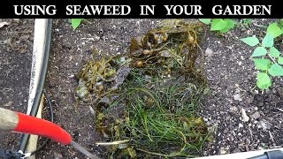 How to use seaweed in your garden