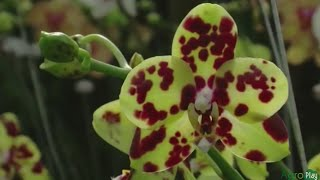 How to Grow Orchids - TvAgro por Juan Gonzalo Angel