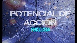 Potencial De Acción | Fisiología