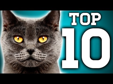 Awesome! 10 Cat Facts You Need