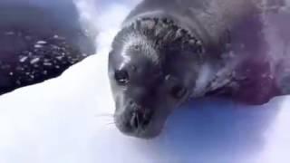 Funny Seal *Subtitle*