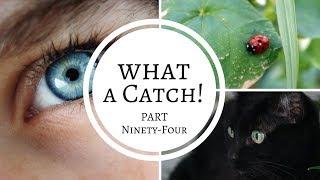 What a Catch! - Part 94 (A Miraculous Ladybug Fanfiction)