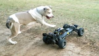 Dogs Chasing Baja 5b RC Car