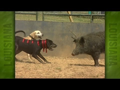 Uncle Earl s Hog Dog Trials 2004