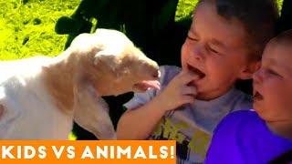 The Funniest Pets Vs Kids & Babies Fail Compilation | Funny Pet Videos