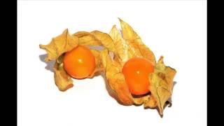 Physalis Fruit & its health Benefits