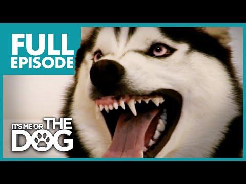 The Demon Husky Diesel Full Episode It s Me or The Dog