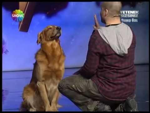 أذكى كلب في العالم باسكال 2012