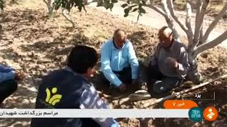 Iran Water dispensing technology for Pistachio trees, Bahabad county آبياري قطره اي باغ پسته بهاباد