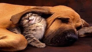 Cute Animals Why We Love Cats and Dogs Pet Documentary