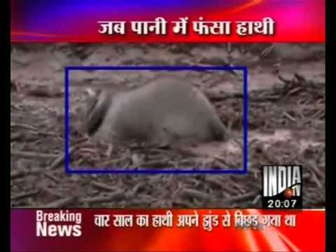 BIJNOR news INDIATV ELEPHANT IN FLOOD