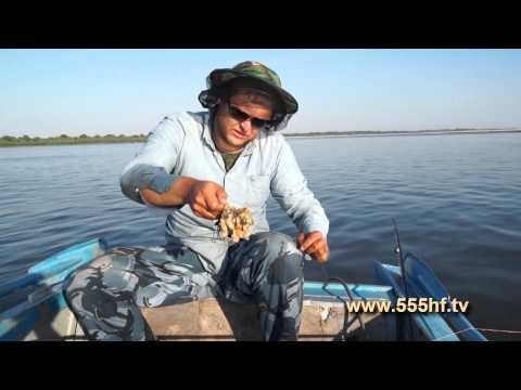 Посмотреть ролик - рыбалка на сома с квоком (вместе веселее) - wwweuro-somde