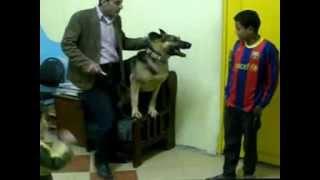 حارس الكلب الاول فى مصر 3.3gp