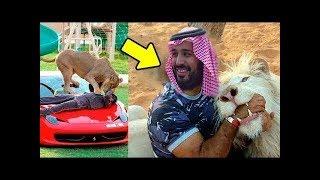 اسرار مرعبة  لا تعرفها عن محمد بن سلمان صدمت الملايين  !! شاهد المفاجأة !!!!!!!