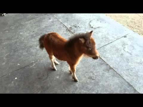 Xxx Mp4 Baby Miniature Horse Chasing Me 3gp Sex