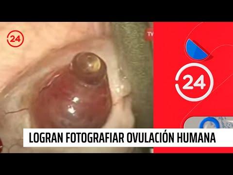 Fotografían ovulación humana