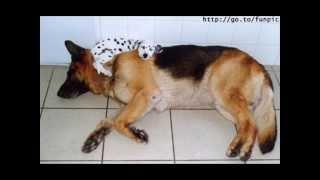 Śmieszne zdjęcia psów i kotów.