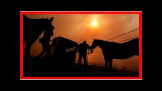 US Newspapers - Hundreds of helping to save the horses in southern california fires
