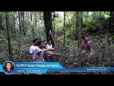 Tim KPH IV Temukan Perangkap Jerat Harimau