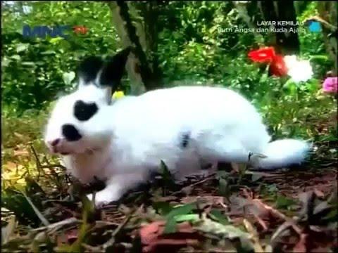 Film TV MNCTV Terbaru 2015 Putri Angsa Dan Kuda Ajaib