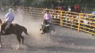 Ezequiel ezqueda jaripeo de tanque de luna y toro embiste a charro de a caballo videos rcm.tv