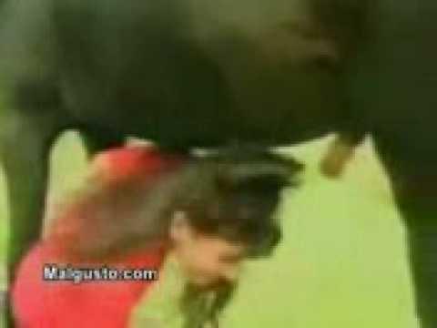 Mulher é surpreendida pelo cavalo
