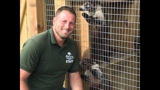 Animal Adventures with Jordan: Coatimundi
