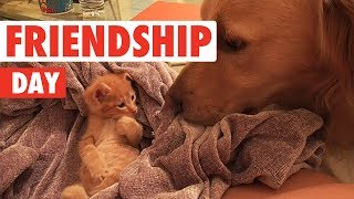 International Day of Friendship   Funny Unlikely Pet Friendship Video Compilation 2017