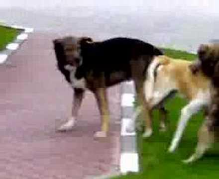 futai in 3 intre 3 caini cu super puteri