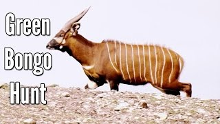 Hunting Antelope with a Tranquilizer Dart - Green Bongo Hunt