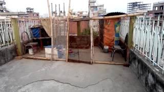 Chad a murgi palon (For hobby purpose)