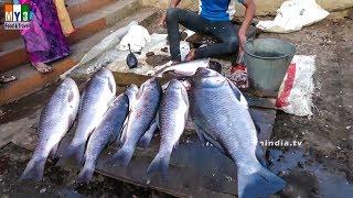 INDIA'S BIGGERT FISH MAKET   INDIAN FISH MARKET