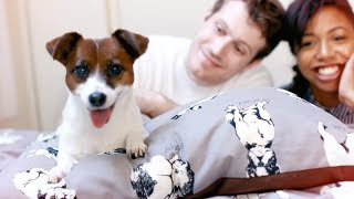 We Moved Our Dog to JAPAN!! (In Cabin from the U.S )