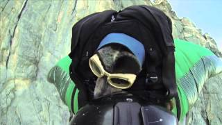 When Dogs Fly: World's First Wingsuit BASE Jumping Dog