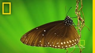 Beautiful Butterflies | National Geographic